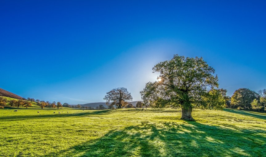 beautiful green field with tree and cloudless blue sky